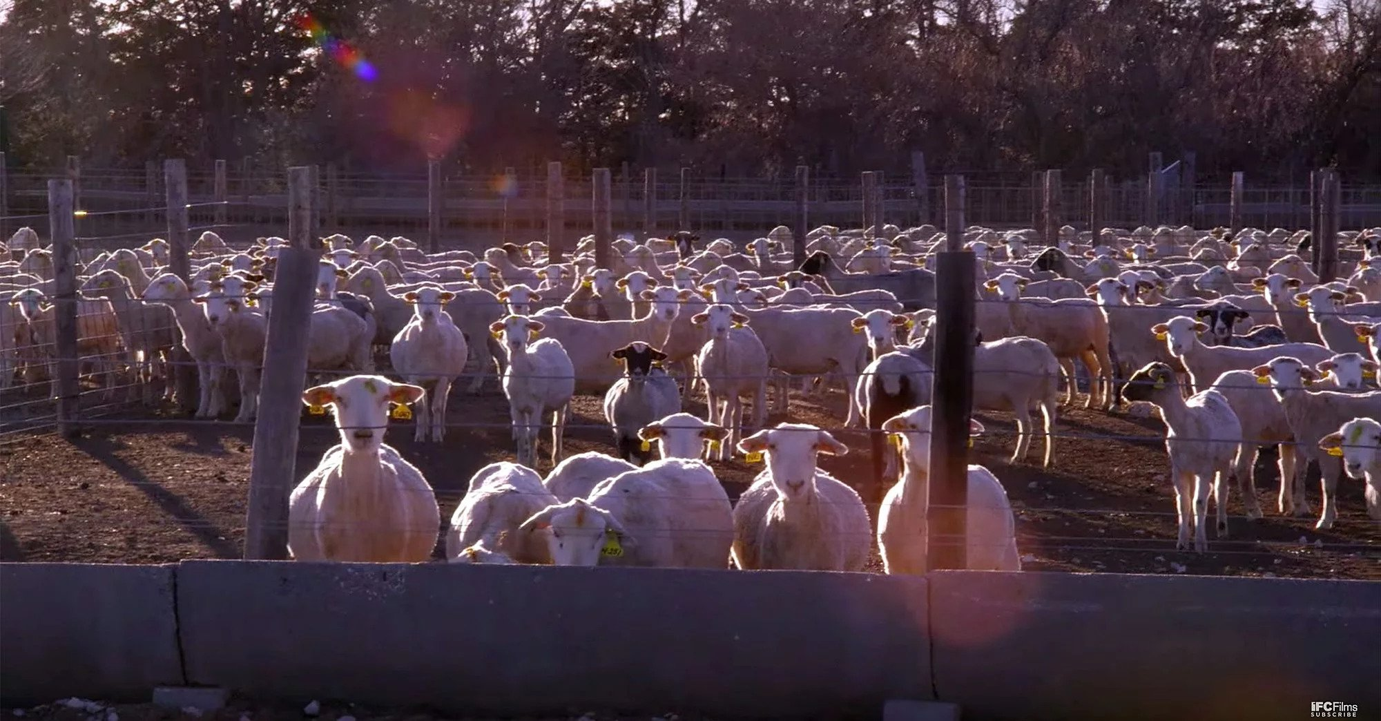 Eating Animals, Factory Farming and the Pandemic