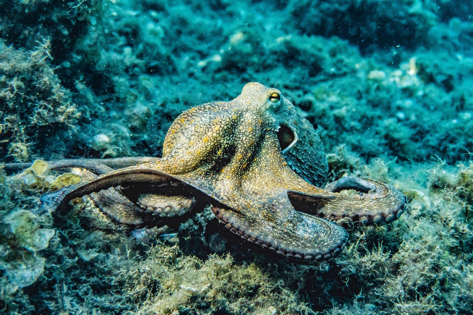 'My Octopus Teacher' Wins Oscar for Best Documentary Feature